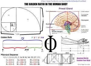 Click for more information on the Golden Ratio.